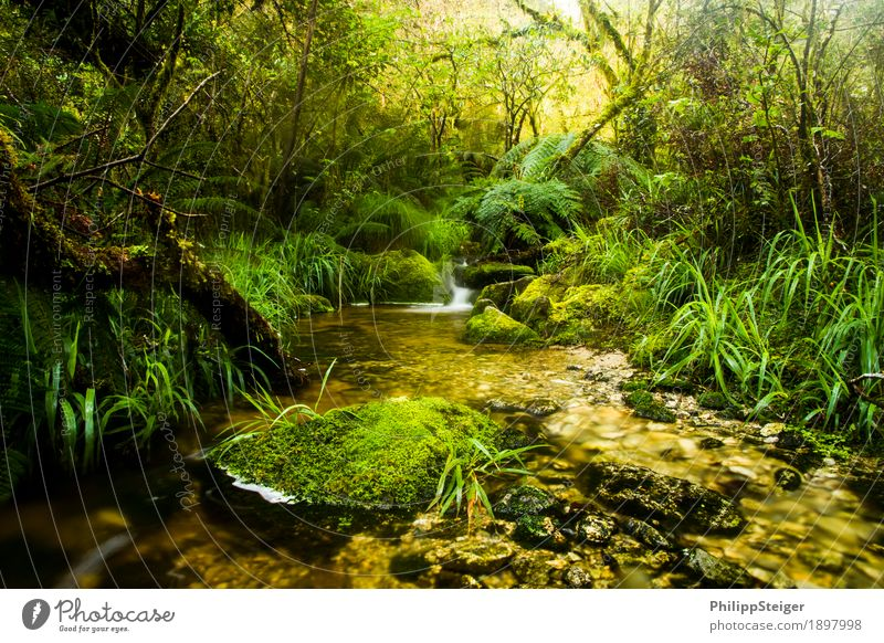 Small stream in New Zealand's rainforests Nature Landscape Plant Water Summer Autumn Climate Tree Grass Bushes Moss Fern Leaf Foliage plant Wild plant Exotic