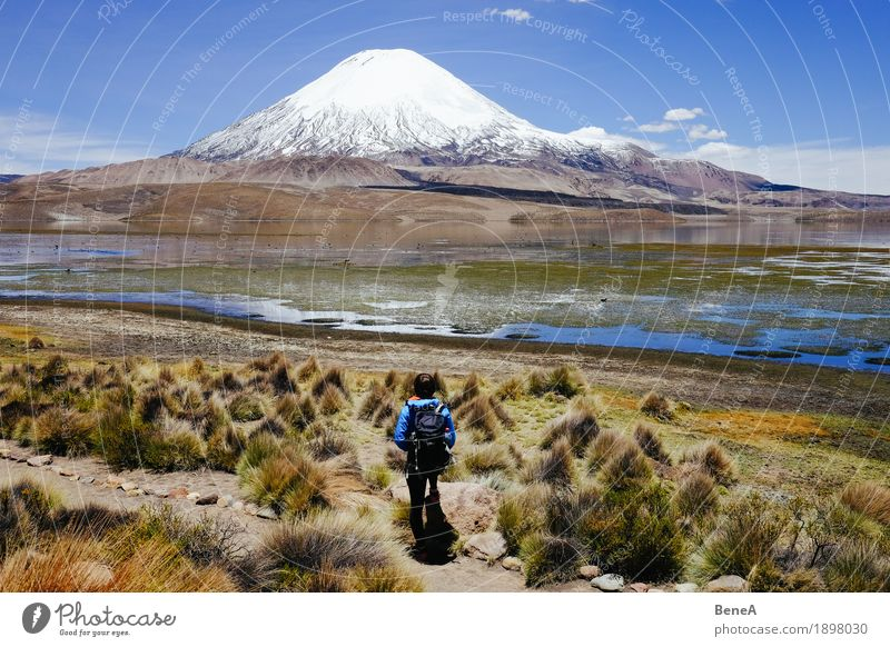 Standing in front of Parinacota Human being Woman Adults Nature Relaxation Vacation & Travel Environment Chile National Park Vulcano Height Altimeter Green