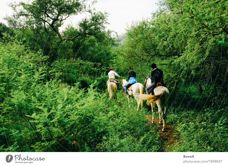 Human being Nature Vacation & Travel Green Tree Landscape Animal Joy Movement Group Tourism Leisure and hobbies Trip Bushes Horse Tradition