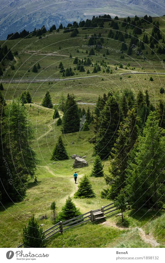 Woman wanders through the Plamorter Boden, Vinschgau, Italy Human being Nature Bog Marsh Going Hiking Adventure Contentment Relaxation Fitness Freedom