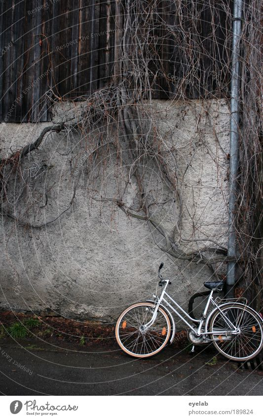 Old Plant House (Residential Structure) Street Wall (building) Wood Lanes & trails Stone Wall (barrier) Building Bicycle Facade Dirty Places Transport Bushes