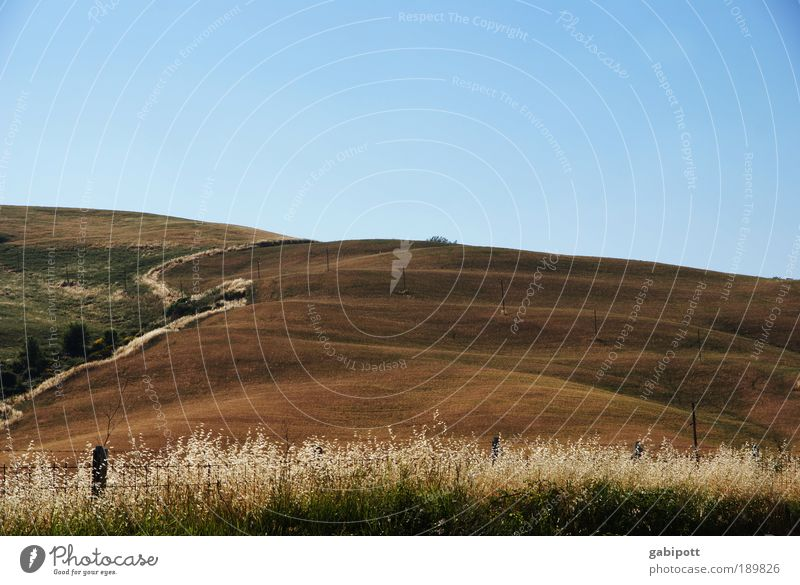 running up that hill Environment Nature Landscape Plant Elements Earth Sky Horizon Summer Beautiful weather Grass Bushes Field Hill Tuscany Fence post Blue