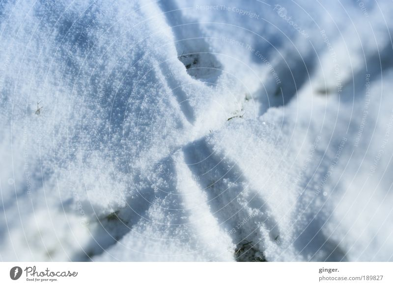 Nature White Winter Environment Cold Snow Lanes & trails Ice Frost Tracks Mysterious Crucifix Freeze Crossed Gray-blue