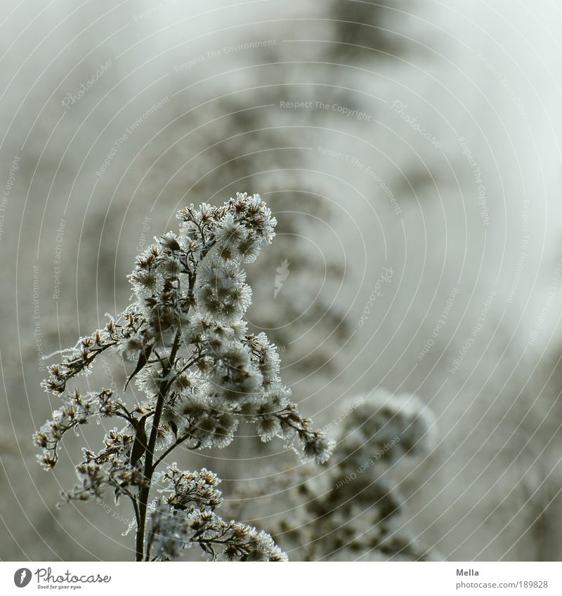 Nature Plant Cold Meadow Grass Sadness Ice Moody Brown Field Environment Growth Gloomy Frost Climate Transience