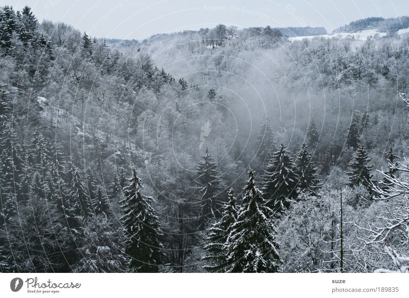 Sky Nature White Plant Tree Loneliness Winter Landscape Forest Environment Dark Cold Snow Air Ice Weather