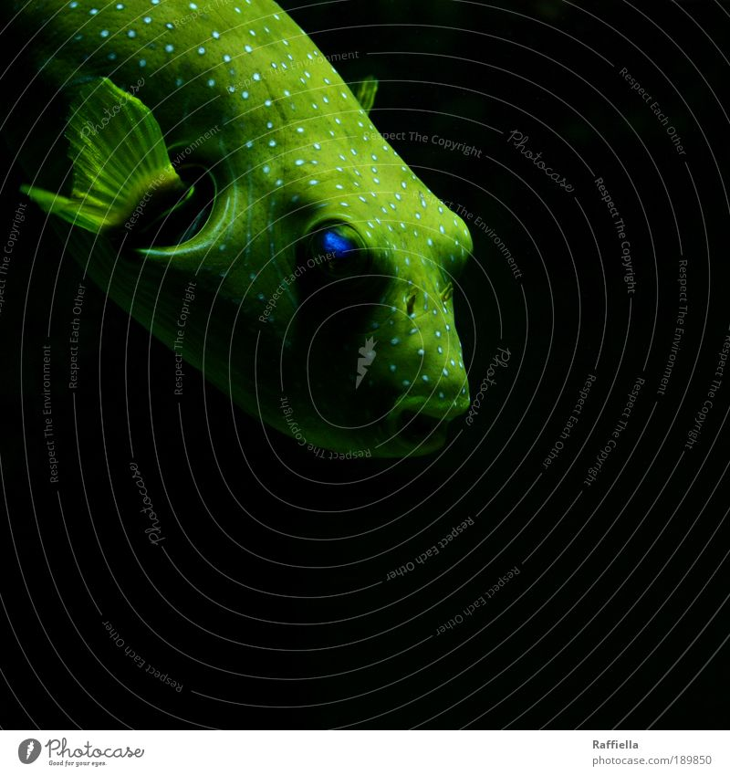 Green Blue Eyes Animal Yellow Movement Dream Sadness Fish Wing Structures and shapes Dive Observe Point Illuminate