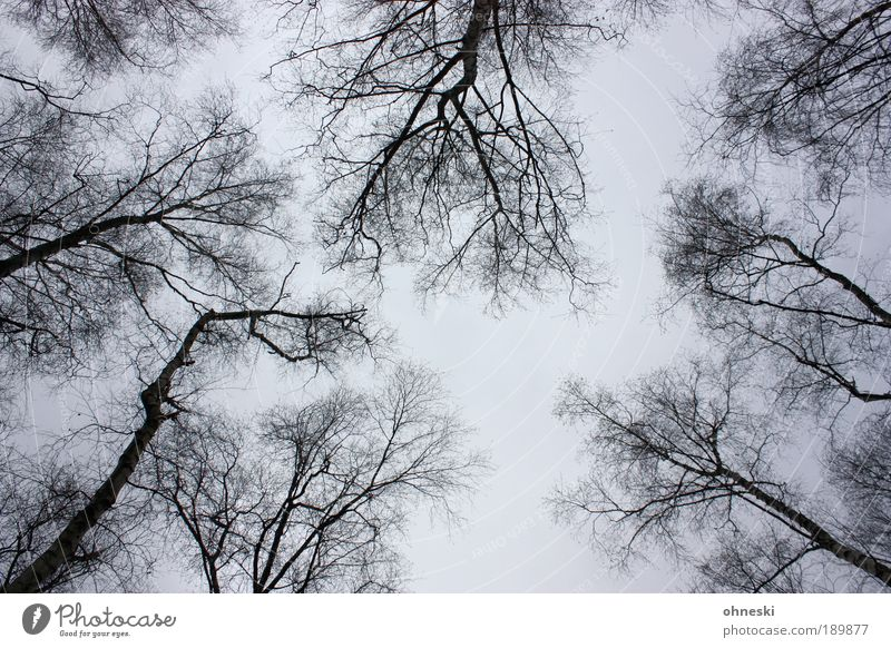 Nature Sky Tree Plant Winter Clouds Loneliness Gray Sadness Landscape Air Environment Grief Gloomy Branch Abstract
