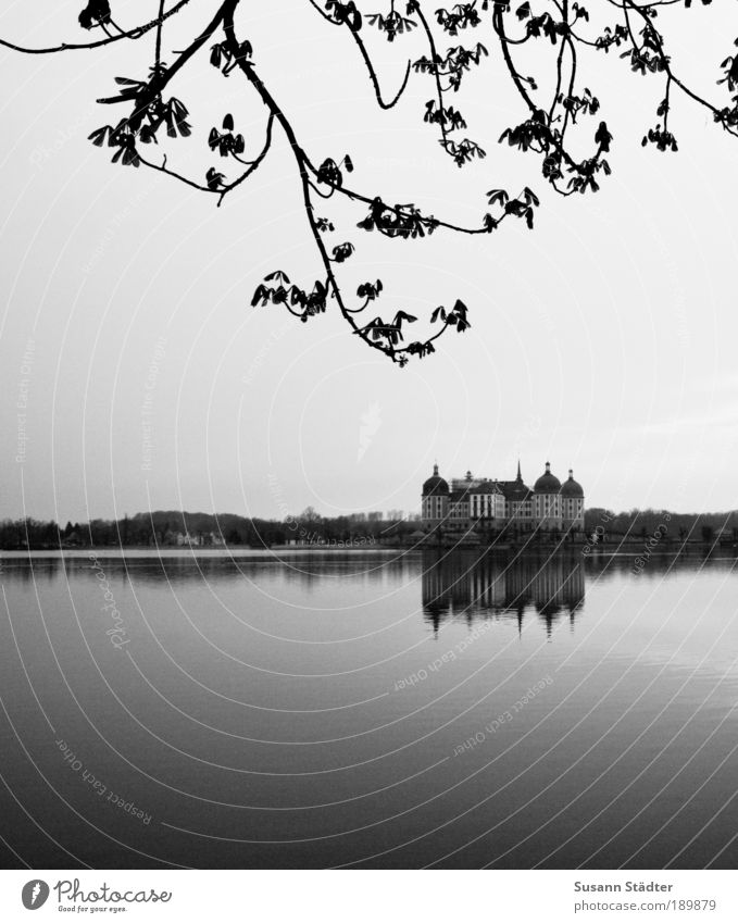 Beautiful Old Tree Calm House (Residential Structure) Forest Leaf Lake Architecture Design Tourism Romance Culture Dresden Point