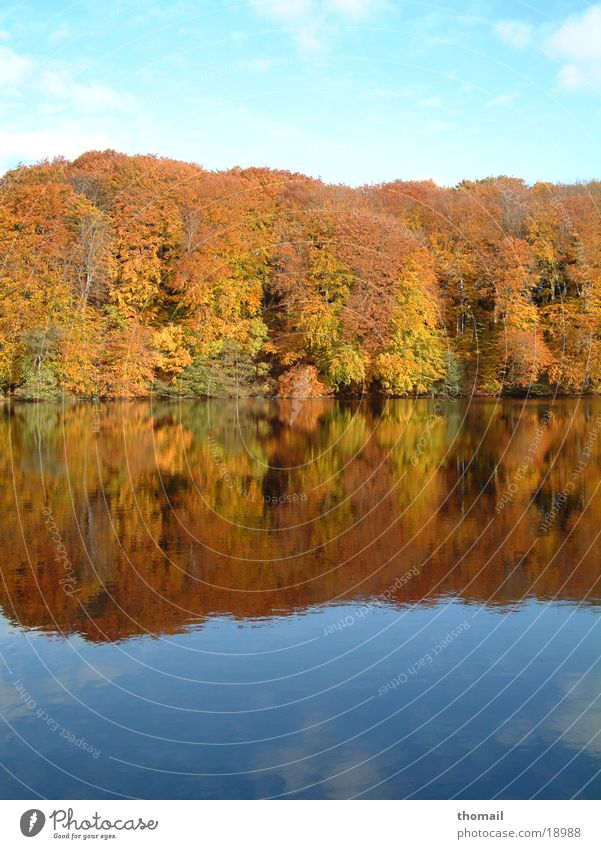 Autumn forest at the lake Lake Leaf Forest Reflection Multicoloured Mirror Fresh Water Abstract Colour To go for a walk