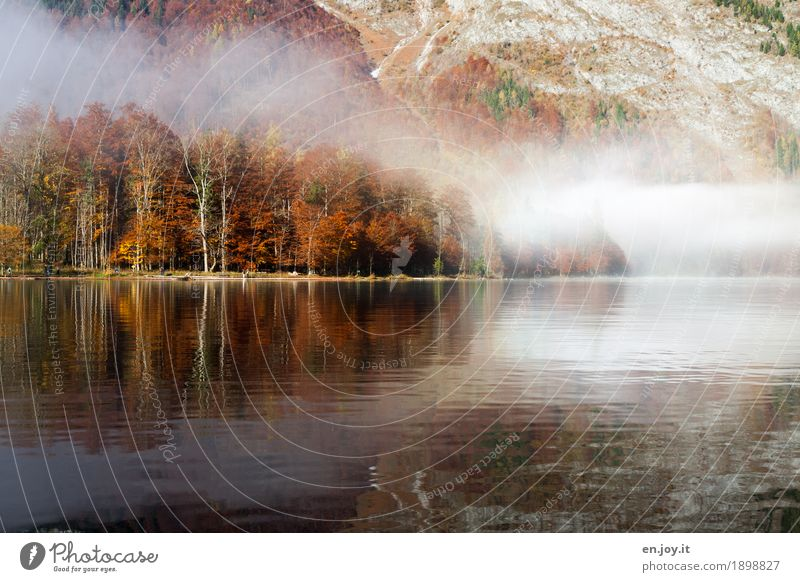 autumn magic Vacation & Travel Nature Landscape Autumn Fog Forest Mountain Lakeside Lake Königssee Orange Sadness Grief Lovesickness Bizarre Idyll Climate