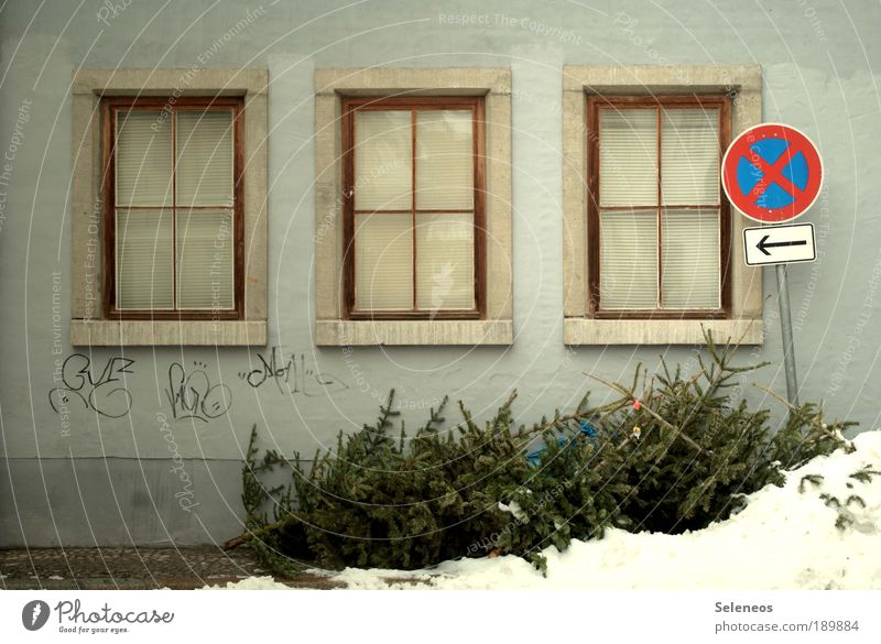 Old Tree Loneliness House (Residential Structure) Winter Window Environment Wall (building) Street Emotions Graffiti Snow Building Wall (barrier) Room Weather