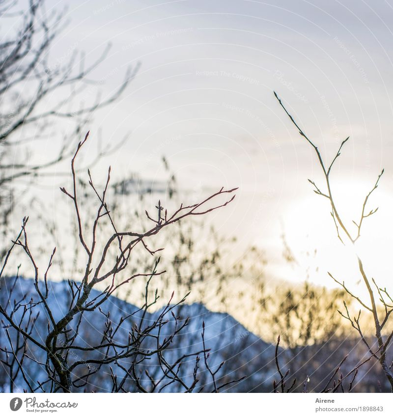 View with ups and downs Landscape Sky Sunrise Sunset Sunlight Winter Beautiful weather Bushes Twigs and branches Alps Mountain Friendliness Natural Blue Gold