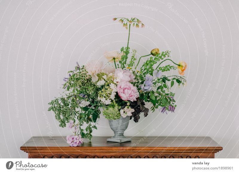 Leaf Blossom Interior design Flat (apartment) Living or residing Room Decoration Esthetic Rose Bouquet Poppy Living room Fern Mother's Day Ivy Peony