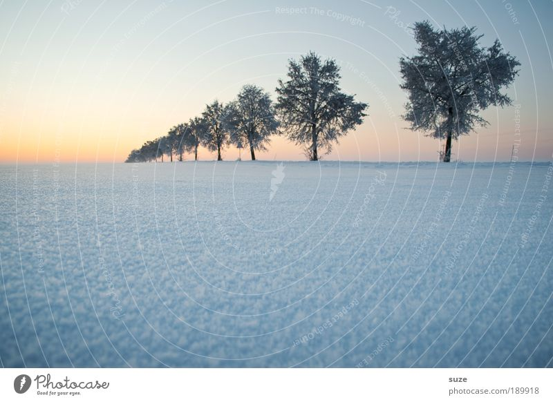 Tree in a row Environment Nature Landscape Plant Elements Air Sky Cloudless sky Horizon Winter Climate Weather Fog Ice Frost Snow Lanes & trails Esthetic