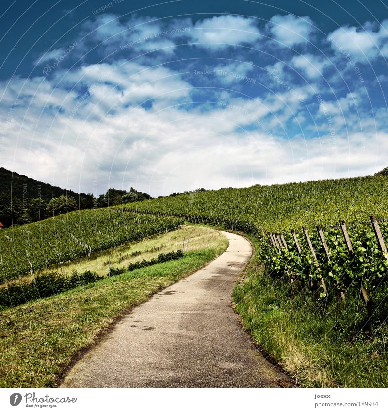 Cultivated Nature Plant Sky Clouds Summer Beautiful weather Foliage plant Field Hill Street Lanes & trails Blue Green Patient Calm Vineyard Extend Winery