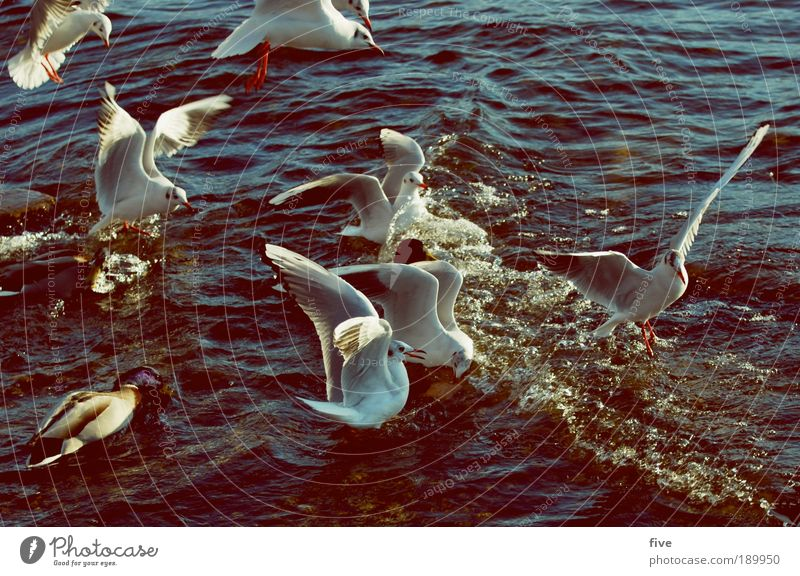 Water Animal Lake Bird Environment Flying Group of animals Wing Beautiful weather Seagull Avaricious Envy Inequity
