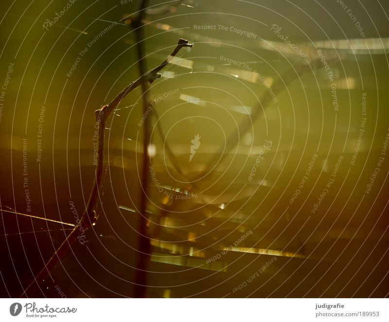 spun Environment Nature Plant Sunlight Summer Spider Fine Delicate Cobwebby Twig Indian Summer Warm colour Warmth Colour photo Exterior shot Detail Day Blur