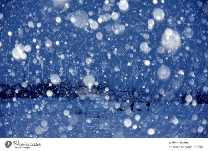 Human being Blue Landscape Winter Cold Snow Snowfall Ice Joie de vivre (Vitality) Frost Storm Bad weather Climate Sleigh Emotions