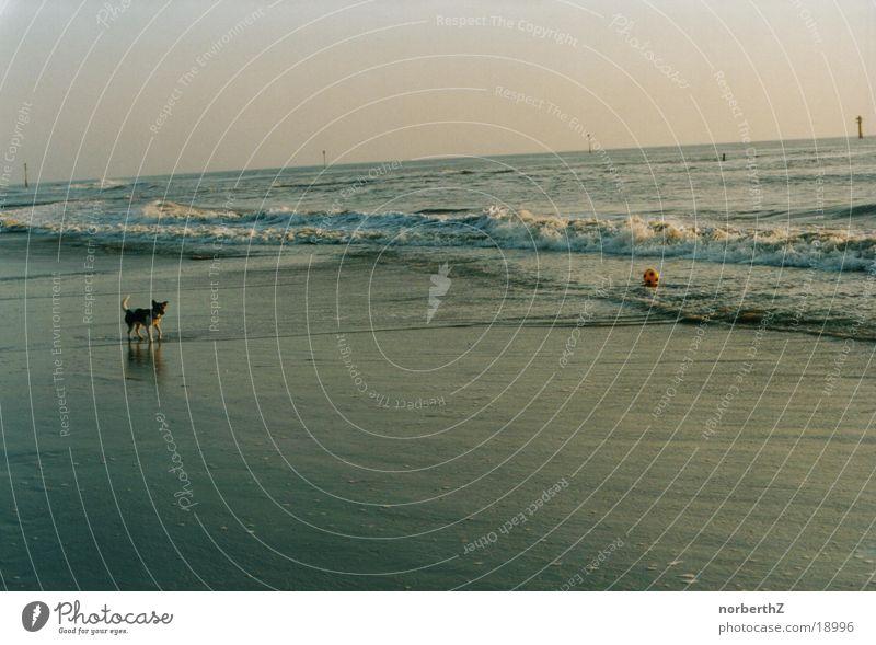 Ocean Dog Divide
