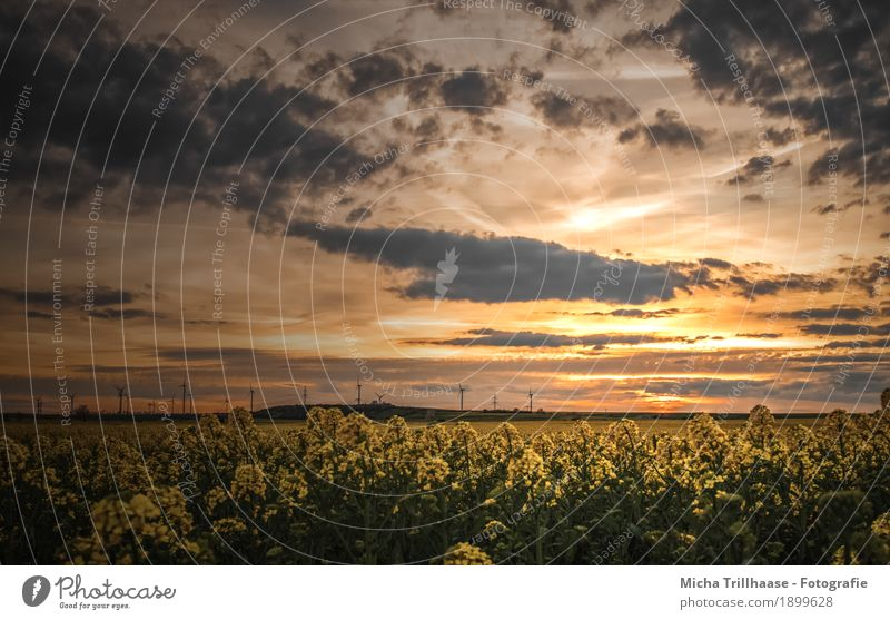 Sunset over the rape field Agriculture Forestry Energy industry Renewable energy Wind energy plant Environment Nature Landscape Plant Sky Clouds Sunrise
