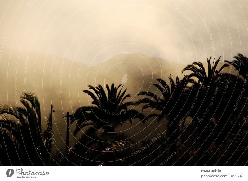 cloud country Foliage plant Exotic Palm frond Palm tree Hill Island Gomera Canaries Climate Fog Shroud of fog Fog bank Cloud field Gold golden shimmer touchland