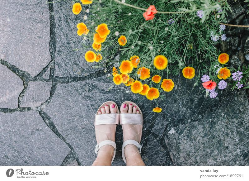 wait for summer Lifestyle Shopping Beautiful Pedicure Feminine Young woman Youth (Young adults) Woman Adults Feet 1 Human being 18 - 30 years 30 - 45 years