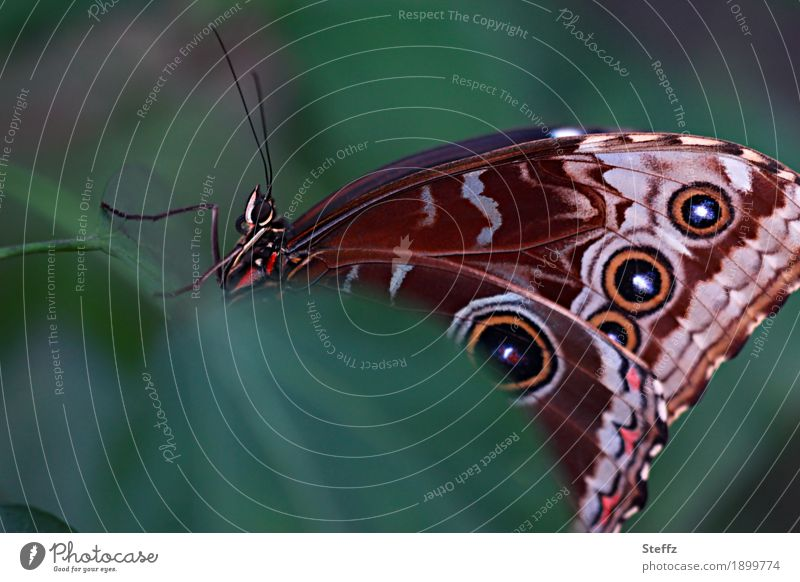 Nature Colour Green Beautiful Leaf Calm Legs Brown Orange Wing Butterfly Snapshot Symmetry Leaf green Attentive Feeler