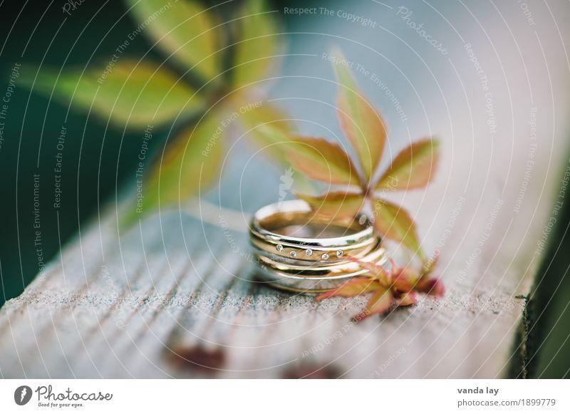 wedding rings Wedding Fashion Ring Wedding band Matrimony Silver Gold Diamond Diamond ring Together Love Loyalty Team Teamwork Divide Colour photo Exterior shot
