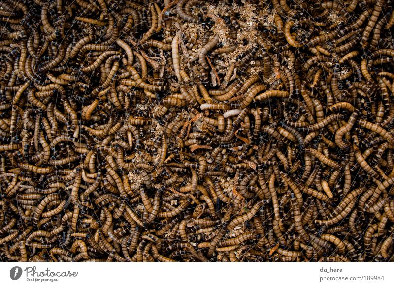 Black Death Dark Movement Small Brown Gold Dirty Group of animals Insect China Chaos Disgust Crawl Hideous Worm