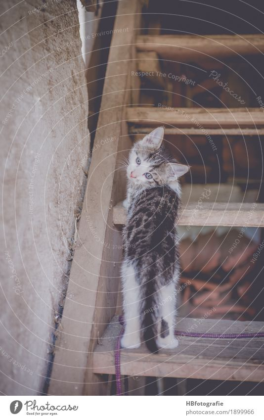 Here I am Nature Animal Pet Cat 1 Baby animal Looking Cute Love of animals Farm kitten Stairs Look back Colour photo Exterior shot Day Animal portrait