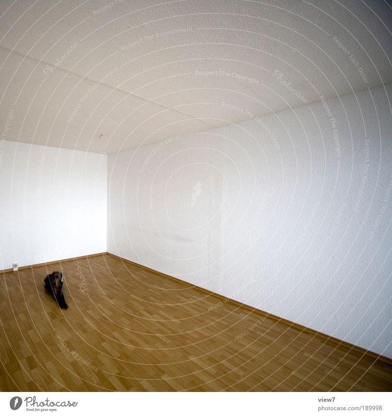 Animal Far-off places Wood Dog Stone Line Brown Room Flat (apartment) Elegant Modern Arrangement Esthetic Animal portrait Authentic Simple