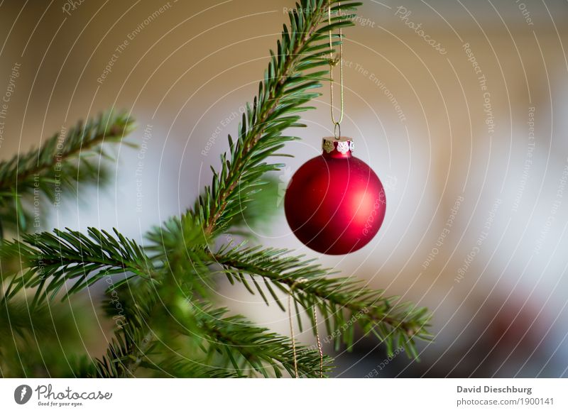 last christmas... Winter Plant Tree Green Red White Christmas & Advent Christmas tree Christmas decoration Glitter Ball Landscape format Branch December