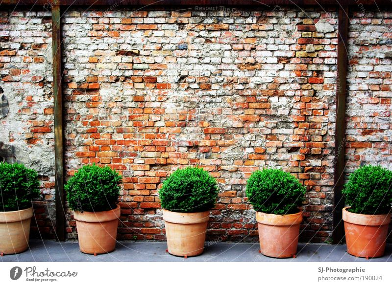 Plant Green White Leaf Black Wall (building) Wall (barrier) Gray Exceptional Stone Brown Dirty Concrete Ruin Build Backyard