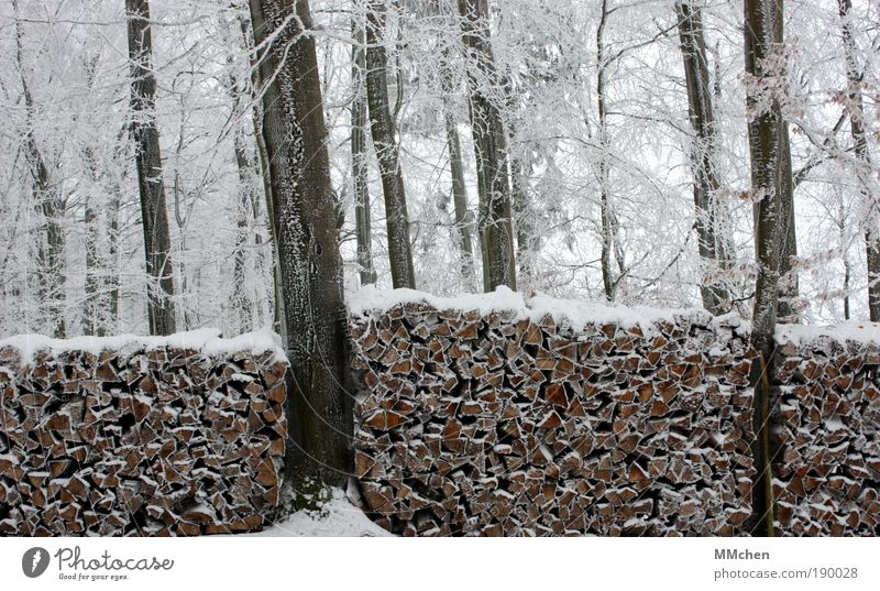 White Water Plant Tree Winter Forest Snow Wall (barrier) Wood Garden Brown Ice Bushes Frost Border Hunting