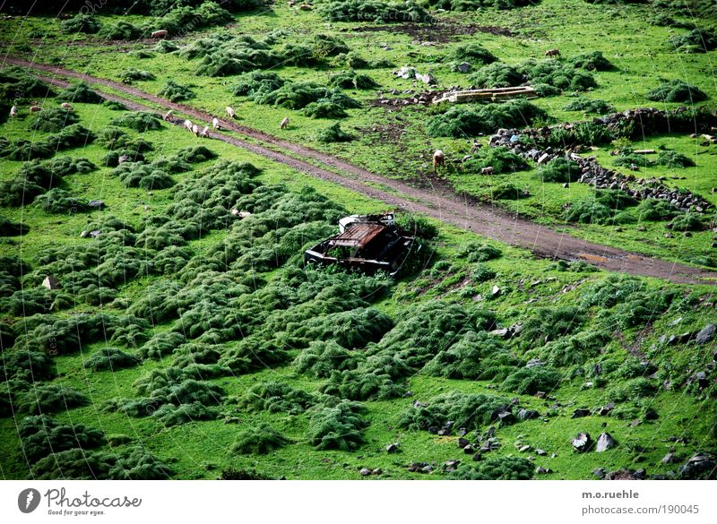 Green Summer Vacation & Travel Meadow Grass Lanes & trails Car Pigs Landscape Earth Nature Planet Bird's-eye view Island Group of animals Bushes