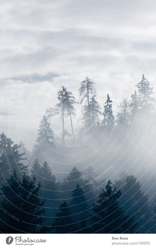 Sky Tree Blue Clouds Forest Cold Relaxation Mountain Happy Gray Landscape Contentment Fog Weather Environment Horizon