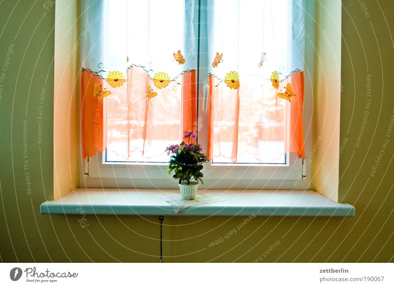 stairwell window Window House (Residential Structure) Staircase (Hallway) Light Window board Curtain Flowerpot live better live uglier
