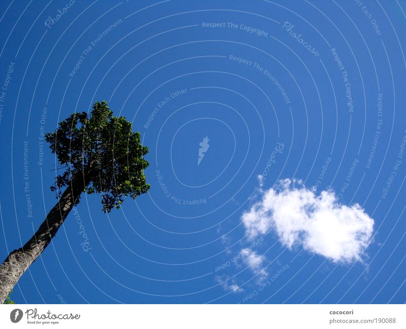 Sky Nature Summer Tree Plant Clouds Dream Air Illuminate Blue sky Australia Free space