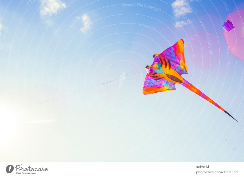 Dragon, Wind, Blue Sky, Free Text Space, Childhood Departure Photography Background picture Kite Hang glider Flying Freedom Leisure and hobbies Happy Horizontal