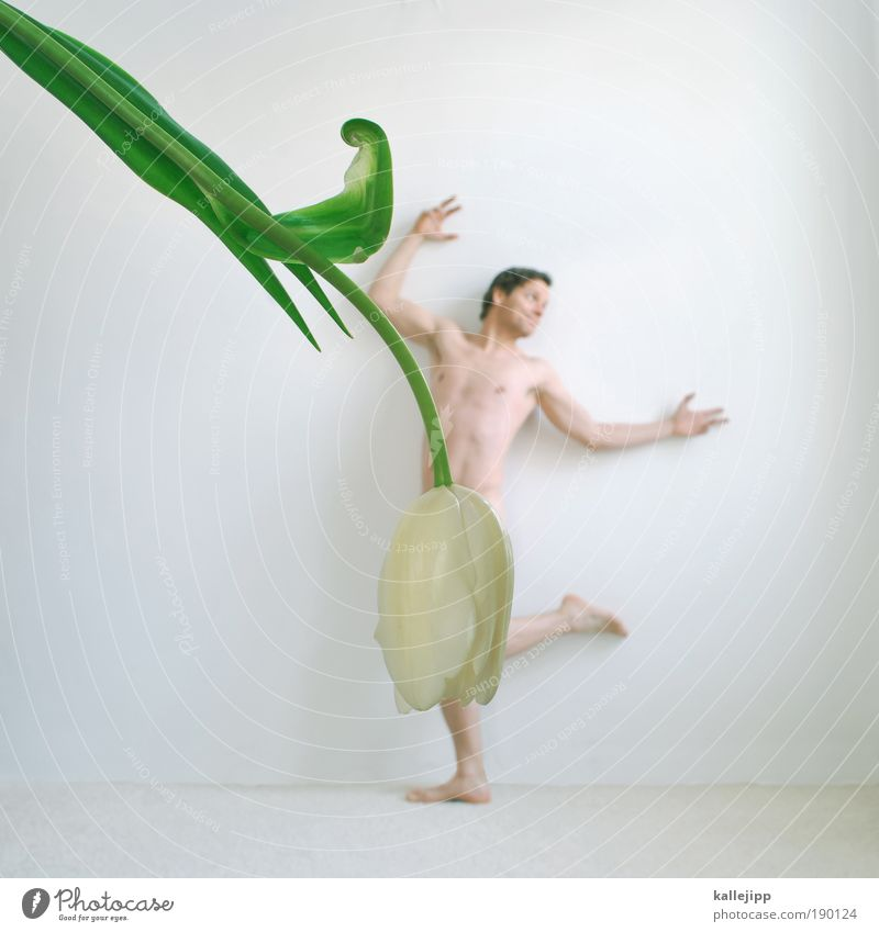 Human being Man Male nude Flower Leaf Joy Adults Blossom Spring Feminine Art Lifestyle Masculine Elegant Body Dance