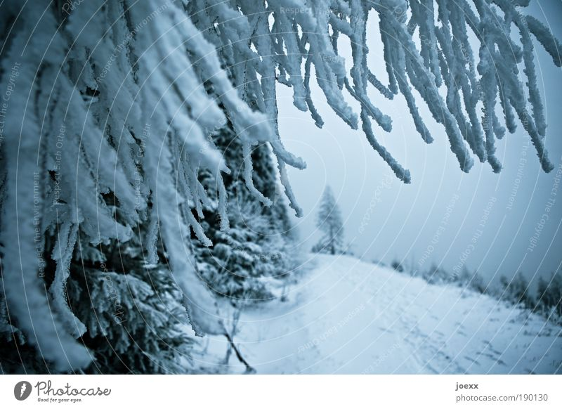 Sky Nature Blue Tree Winter Forest Cold Snow Mountain Lanes & trails Ice Leisure and hobbies Frost Branch Snowscape Wide angle