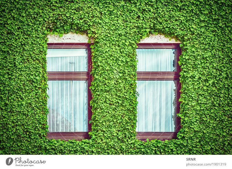 Windows among Ivy Plant Green House (Residential Structure) Architecture Building Facade Flat (apartment) Home Curtain Lush Creeper Domicile Sprout Window frame
