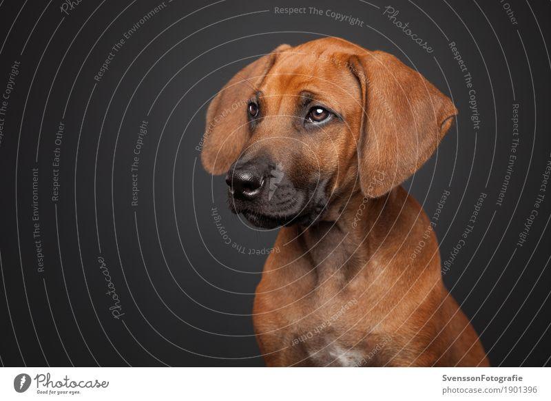 Dog Animal Healthy Sit Pet Animal face