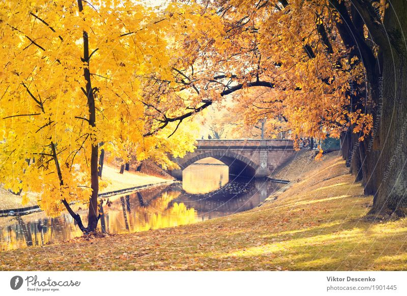 Riga City Canal and bridge Beautiful Sun Garden Nature Landscape Autumn Tree Leaf Park Forest Baltic Sea Street Natural Yellow Gold Green Colour central fall