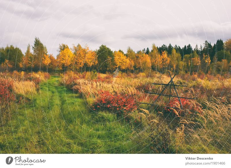 A field in rural landscape Beautiful Summer Sun Environment Nature Landscape Plant Autumn Tree Grass Leaf Park Meadow Forest Baltic Sea Growth Bright Natural