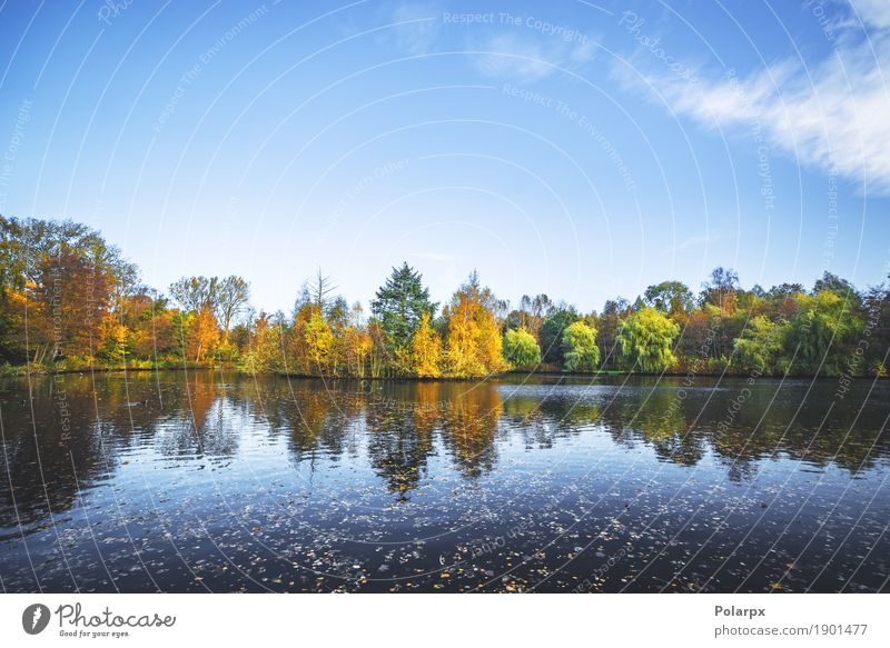 Autumn landscape with a lake and trees Beautiful Vacation & Travel Environment Nature Landscape Sky Tree Leaf Park Forest Pond Lake River Bright Brown Yellow