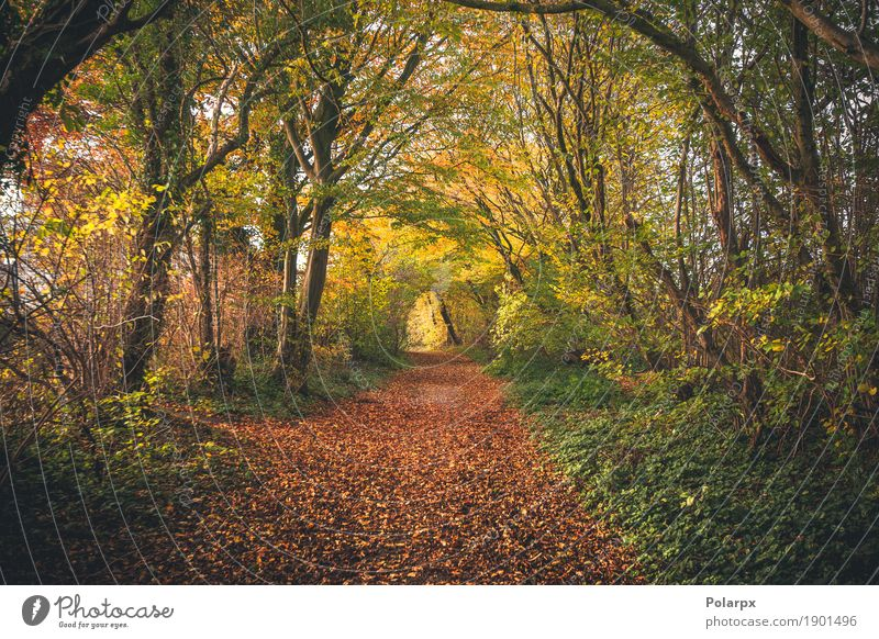 Fairytale forest in the fall Beautiful Environment Nature Landscape Autumn Tree Leaf Park Forest Street Lanes & trails Bright Natural Yellow Gold Green Red