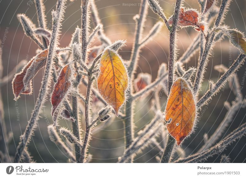 Colorful leaves covered with frost Beautiful Winter Snow Garden Environment Nature Landscape Plant Autumn Weather Tree Leaf Park Freeze Growth Cool (slang)