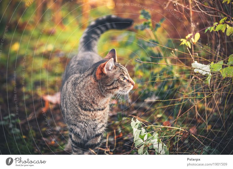 Cat walking in a garden in the morning Cat Nature Green Beautiful Relaxation Loneliness Animal Face Grass Playing Small Garden Gray Cute Seasons Posture