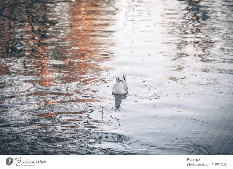 Wild bird in the cold water in the morning Sky Nature Blue Green Beautiful White Ocean Landscape Animal Winter Autumn Natural Movement Coast Gray Lake